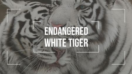 Ontwerpsjabloon van Youtube Thumbnail van Endangered Animals White Tigers
