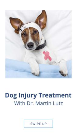 Dog Injury Treatment Offer Instagram Story Modelo de Design