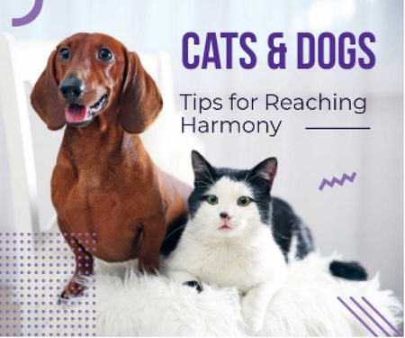 Ontwerpsjabloon van Large Rectangle van Tips for reaching harmony between cat and dog poster