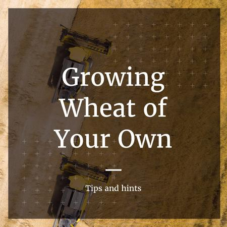 Ontwerpsjabloon van Instagram van Tips and hints for growing Wheat