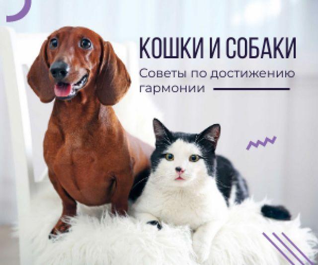 Tips for reaching harmony between cat and dog poster Medium Rectangle – шаблон для дизайна