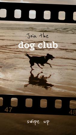 Happy Dog running on Beach Instagram Story Design Template