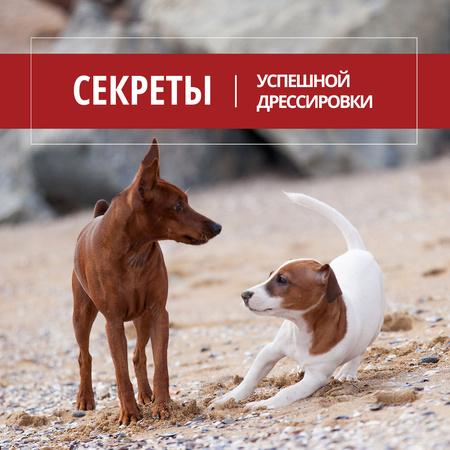 Secrets of puppy training with Cute Dogs Instagram – шаблон для дизайна
