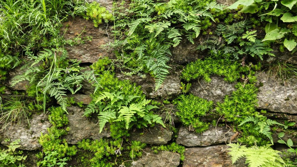 Old stones with fern greens —デザインを作成する