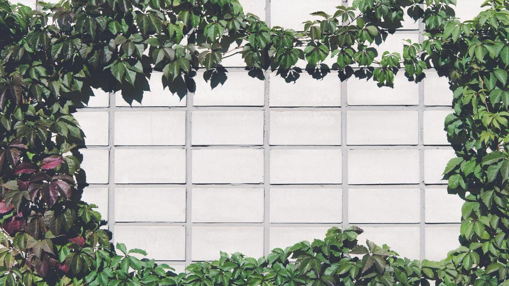 Brick Wall covered with beautiful Ivy — Maak een ontwerp