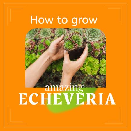 Woman holding Echeveria Plant Instagram Modelo de Design