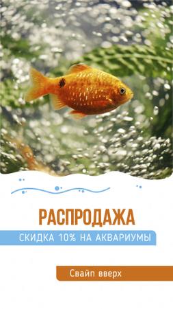 Discount Sale Offer with Golden Fish Instagram Story – шаблон для дизайна