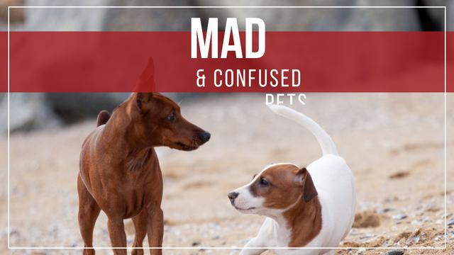 Pets Behavior Two Dogs on a Walk Youtube Thumbnail Design Template