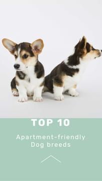 Apartment-friendly Dog Breeds Ad with Cute Puppies