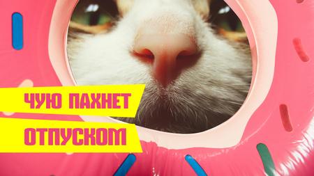 Funny Kitty sniffing Donut Youtube Thumbnail – шаблон для дизайна