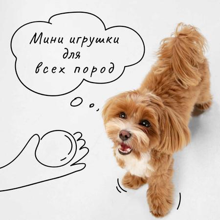 Dog Walking services with red Puppy Instagram – шаблон для дизайна