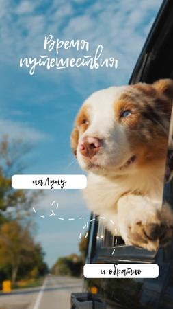 Travelling with Pet Dog in Car TikTok Video – шаблон для дизайна