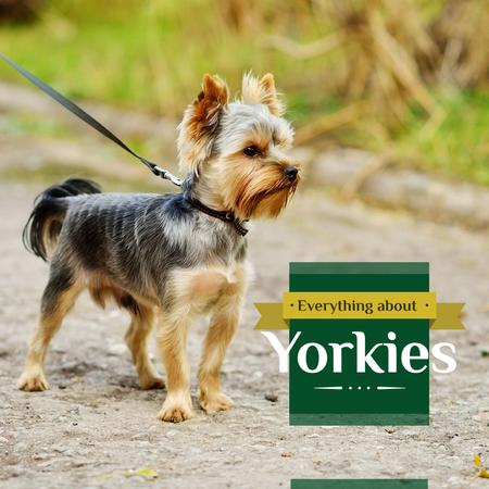 Designvorlage Adorable little Yorkshire Terrier für Instagram