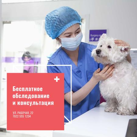 Vet Clinic Ad Doctor Holding Dog Instagram AD – шаблон для дизайна