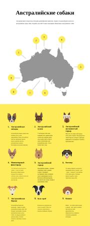 Informational infographics about Australian dogs Infographic – шаблон для дизайна