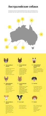 Informational infographics about Australian dogs Infographic – шаблон для дизайна