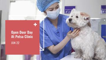 Veterinarian examines a Dog