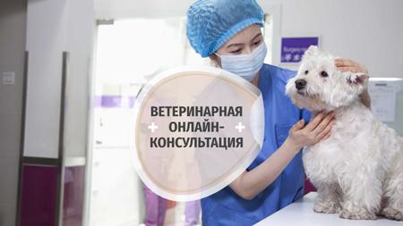 Dog in Animal Hospital Youtube – шаблон для дизайна