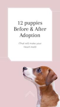 Adoption concept with Dog in pink