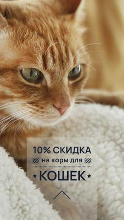 Toys for Cats Discount Offer Instagram Story – шаблон для дизайна