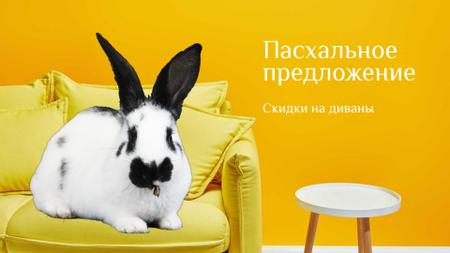 Cute Easter Bunny sitting on the sofa Full HD video – шаблон для дизайна