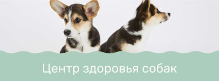 Dog health center with cute Corgi Puppies Facebook cover – шаблон для дизайна