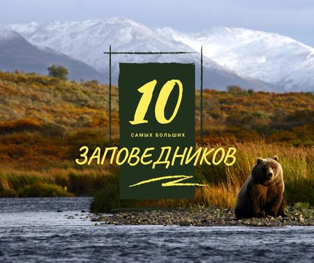 Wild bear in habitat Facebook – шаблон для дизайна