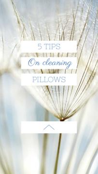 Cleaning Pillows Tips with Tender Dandelion Seeds
