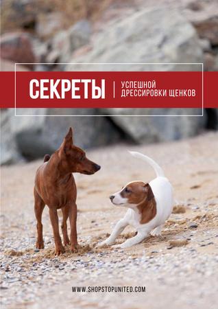 Secrets of puppy training Poster – шаблон для дизайна