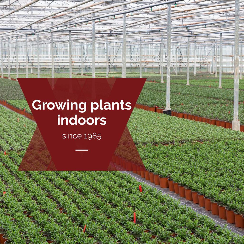 Plantilla de diseño de Farming plants in Greenhouse Instagram
