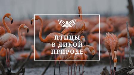 Wild Flamingo Birds in Habitat Youtube Thumbnail – шаблон для дизайна