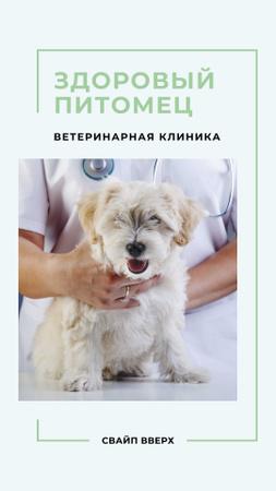 Cute Puppy in Veterinary Clinic Instagram Story – шаблон для дизайна