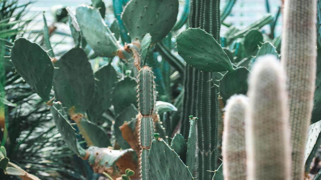 Cacti in Botanical Garden — Crea un design