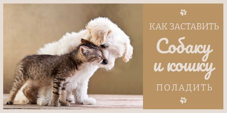 Pets Behavior with Cute Dog and Cat in Brown Twitter – шаблон для дизайна