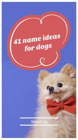 Plantilla de diseño de Name Ideas for Dogs Ad with Cute Puppy Instagram Story