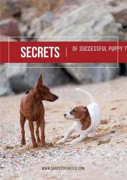 Secrets of puppy training