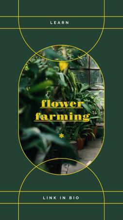 Modèle de visuel Flowers and Plants in Greenhouse - Instagram Story