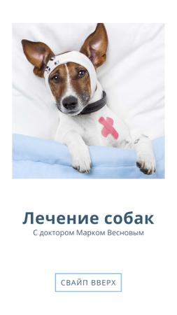 Dog Injury Treatment Offer Instagram Story – шаблон для дизайна