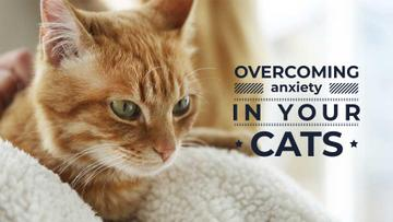 Cat care tips