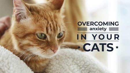 Plantilla de diseño de Cat care tips FB event cover