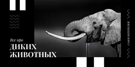 Wild elephant portrait Image – шаблон для дизайна
