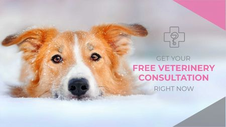 Plantilla de diseño de Free veterinary consultation Offer Title