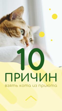 Cute Cat looking at Window Instagram Story – шаблон для дизайна