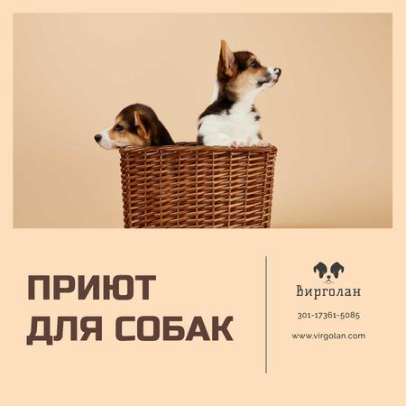 Pet Shelter Promotion Puppies in Basket Instagram AD – шаблон для дизайна