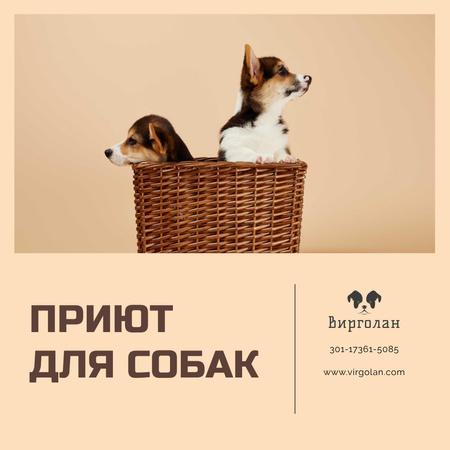 Pet Shelter Promotion Puppies in Basket Instagram AD – шаблон для дизайна