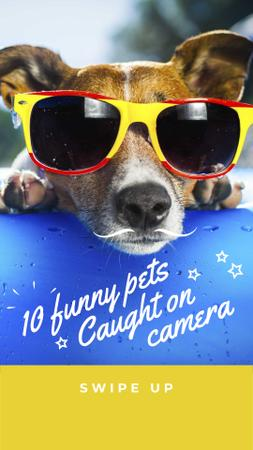 Template di design Funny Dog in Sunglasses Instagram Story