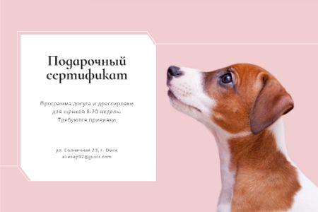 Puppy play socialization class Gift Certificate – шаблон для дизайна