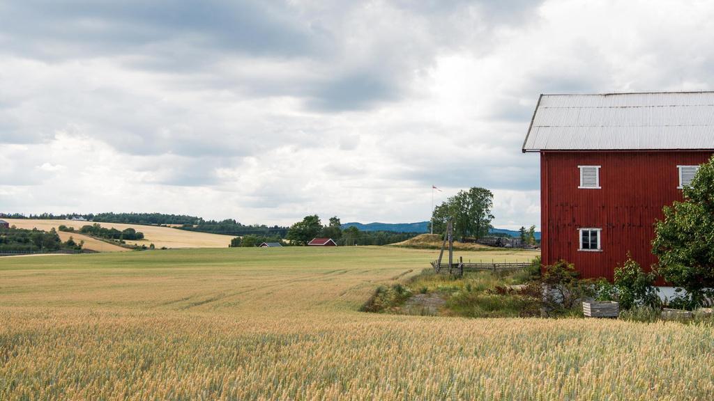 Brown House in wheat field — Створити дизайн