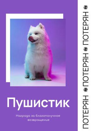 Lost Dog information in purple Flayer – шаблон для дизайна