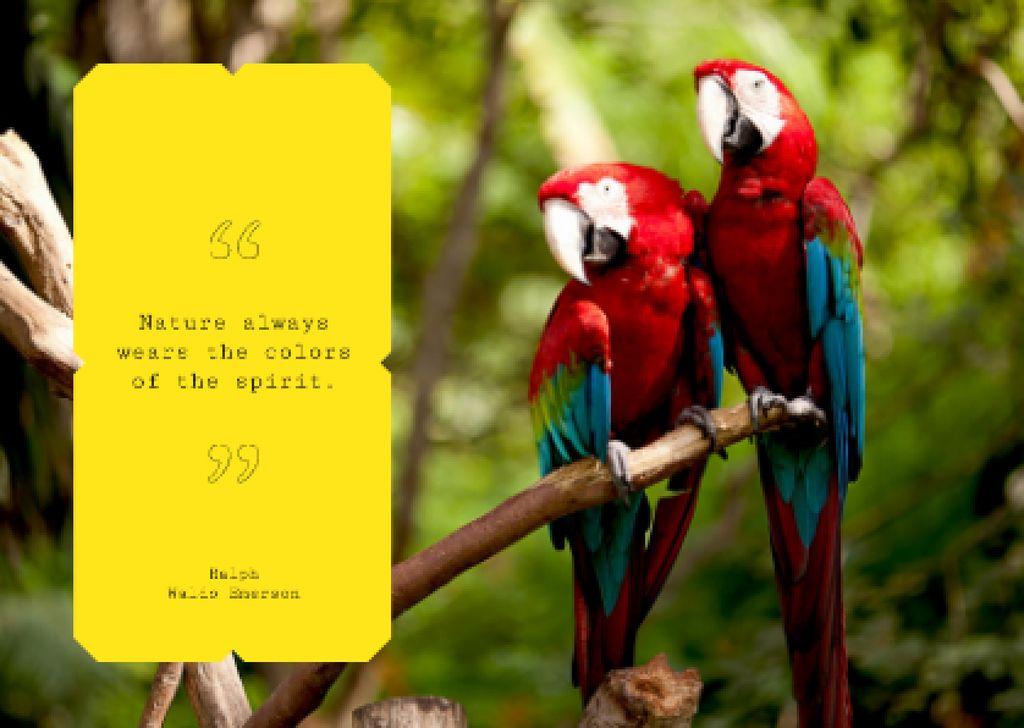 Ara birds in jungle Postcard Design Template